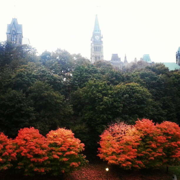 Beautiful Parliament Hill. Fall colours.